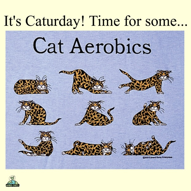 caturdaycataerobics.jpg